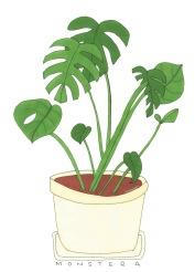En växt som inte behöver vattnas.